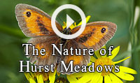 "Run the film ""The Nature of Hurst Meadows"""