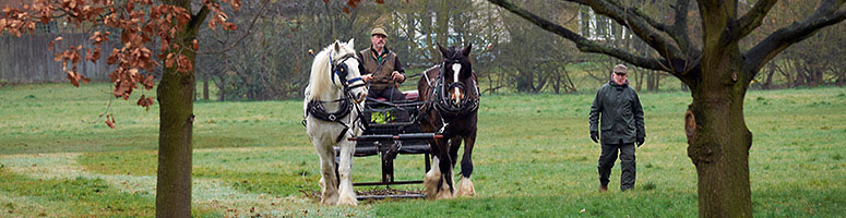 Shire Horses in Hurst Meadows - photo ©Mick Rock